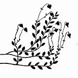 vector cranberry bush on white background