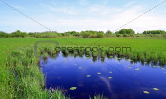 small lake on spring field