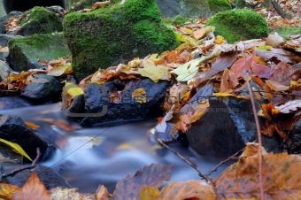 A slow moving stream in a forest decked out in fall colors