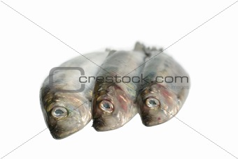 three fresh herrings
