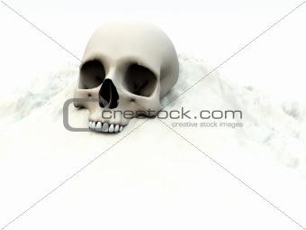 Skull In White 75