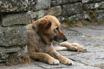 Alone Dog