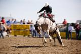 Saddle Bronc
