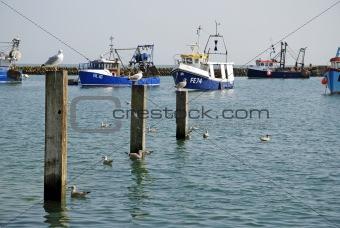 fishing boats and sea gulls