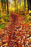 Trail in fall forest