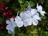 Tropcial Flower