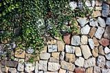 Ivy against stone wall