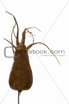 Freaky Parsnip Roots