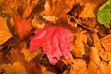 leaves during fall season