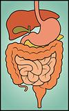Digestive System