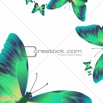 bright green butterflies