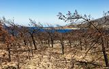 Burned forest on Crete, Greece