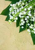lovely bunch of lily of the valley on a stone background