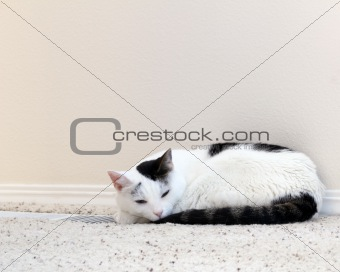Cat Warming Floor Vent