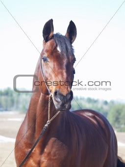 portrait of beautiful horse in spring field