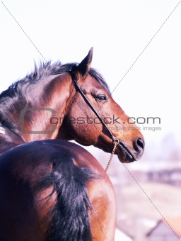 portrait of beautiful around horse in spring field