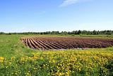 plow field
