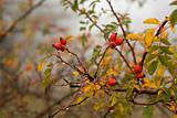 Nature fruits