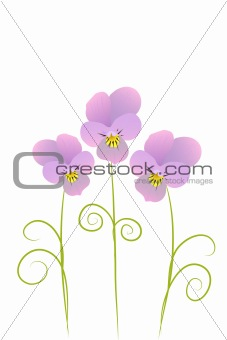 three violet