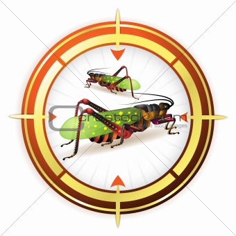 Target with grasshopper