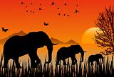 Sunset with Elephants and Flock of Birds and butterfly