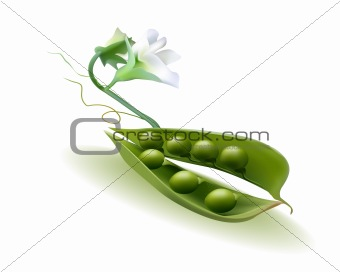 pod peas with a flower