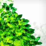 Fresh spring foliage background.