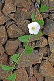 flower on stone