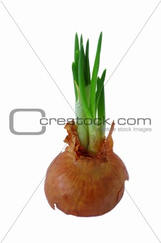 green fresh bulbs of onion isolated on white