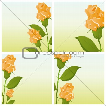 beautiful roses backgrounds