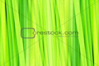 abstract green leaf for background