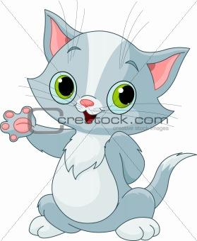 Kitten showing