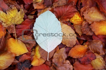autumn beech forest leaves yellow red golden floor