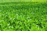 weed grass field