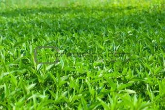 weed grass field