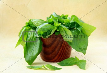 green fresh basil in a wooden bowl