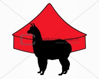 Alpaca in circus
