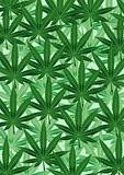 Background from the leaves of hemp