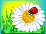 Ladybird and camomile