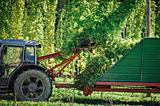 Harvesting Hop