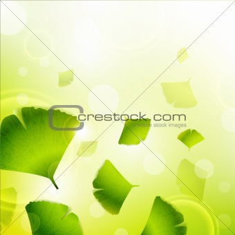 Ginkgo Biloba leaves background
