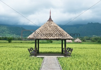 Green rice field in Thailand