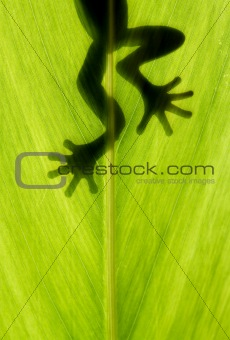 frog stay on leaf in backlight
