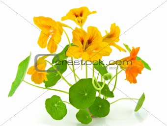 Beautiful orange flower isolated on white