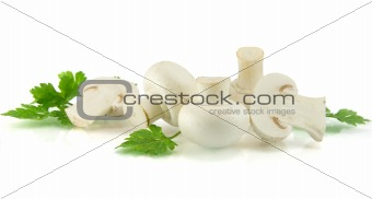 champignons on white background