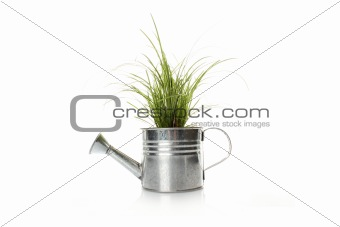 Watering with a green plant