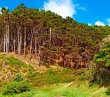 Beautiful landscapes of New Zealand