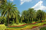 Fine tropical garden with palm trees and flowers.