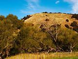 Rolling hills - New Zealand