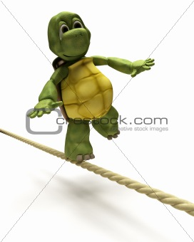 Tortoise balancing on a tight rope